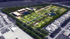 150 Acres Of Detroit Set to Become Huge Urban Farm http://insteading.com/2014/09/12/150-acres-detroit-becomes-huge-urban-farm/