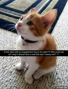 this is how i want to be proposed to. If I am not proposed to with a kitten. I will decline.(Proposal with kitten. Cute Animal Memes, Animal Jokes, Cute Funny Animals, Funny Animal Pictures, Funny Cute, Cute Cats And Kittens, I Love Cats, Crazy Cats, Cute Puppies
