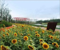 Шанхайский Парк от студии Turenscape