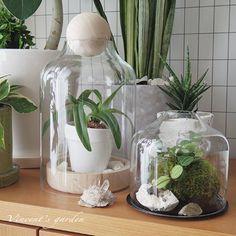 無印良品エアプランツとテラリウム計画。 : ぶいくんの庭
