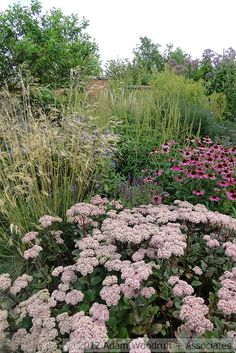 sedum, coneflowers and grasses...Bury Court