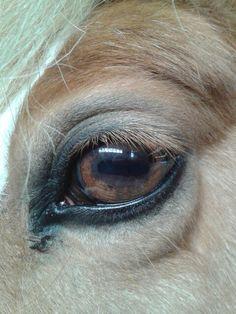 Horse eye!
