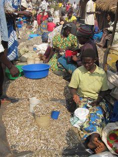 Selling dried fish, Bukedea market, Uganda