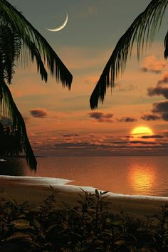 New Wonderful Photos: Coconut trees, Sunset, Beach, Cozumel Going here in November super excited! Beautiful Sunrise, Beautiful Beaches, Beautiful Moon, Sunset Beach, Moon Beach, Palm Beach, Beach Sunsets, Beach Night, Red Sunset
