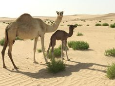 Nuzhath Ideas, One stop solution for your Abu Dhabi Desert Safari Tour.