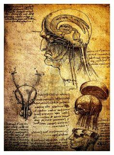 Antiguos dibujos anatómicos realizados por Leonardo Da Vinci, un estudio del cerebro humano y el sistema nervioso Foto de archivo