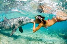 What I would give to kiss a dolphin in the face! LOVE, LOVE, LOVE!