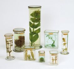 Perugia Museums 2011 - botanical specimens via Fausto Gazzi Atelier d'Arte  Preserve specimens in 70% ethyl alcohol and 30% water.