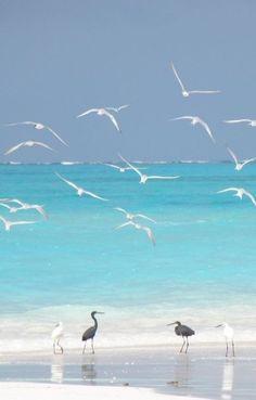 Beautiful World, Day A day at the beach. Sea And Ocean, Ocean Beach, Summer Beach, Beach Relax, Hawaii Beach, Sand Beach, California Beach, Oahu Hawaii, Magic Places