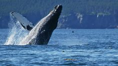Avoid the crowds and take advantage of lower prices by booking an Alaska cruise for May or June. This is also a great time to see the humpback whales.
