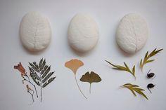 herbarium stones from ohchipochi