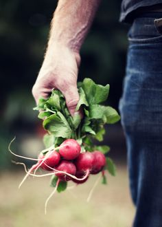 This reminds me of my Mom or Dadcoming from the garden with radishes for the dinner table.