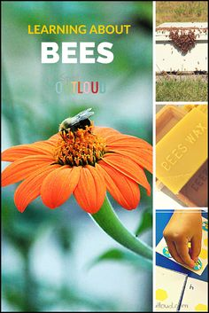 Preschool Science: Learning About Bees. @SpellOutloud has many bee activities, resources, and free printables to add to a bee unit study for younger children.