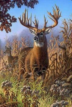 """""""Deer in Cornfield"""" Sherpa Lined Borrego Fleece Throw - American Expedition Wildlife Paintings, Wildlife Art, Animal Paintings, Whitetail Deer Pictures, Deer Photos, Deer Pics, Nature Animals, Animals And Pets, Vida Animal"""