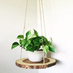 Wood slab slice floating hanging planter shelf table is part of Diy wood shelves This wood shelf suspends from the ceiling and gives any room a clean minimalist touch I like using it as a planter s - Diy Wood Shelves, Hanging Wood Shelves, Plant Shelves, Deco Nature, House Plants Decor, Bedroom Plants Decor, Wood Slab, Wood Wood, Wood Bark