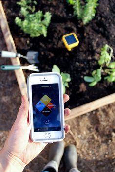 Edyn Garden Sensor Review // Delia Creates #sponsored #EdynGarden