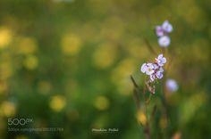 #nature Flowers by ibrahimfathi