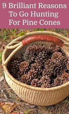 Garden Crafts, Garden Projects, Garden Art, Home Crafts, Home And Garden, Garden Tips, Kid Crafts, Pine Cone Art, Pine Cone Crafts