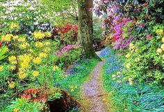 flowered pathway through forest