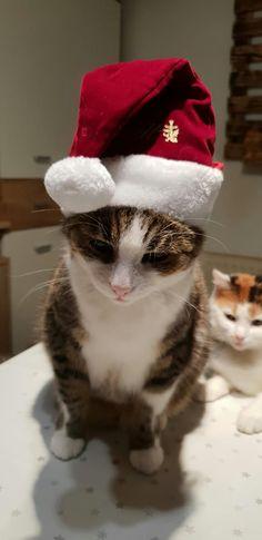 Animals, Christmas, Animales, Animaux, Animal, Animais