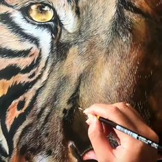 As an artist, I sell all my works. Painting Fur, Tiger Painting, Painting & Drawing, Watercolor Paintings, Hyper Realistic Paintings, Realistic Drawings, Colorful Drawings, Art Drawings, Painting Videos