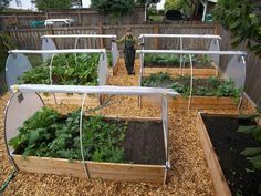 Vegetable beds with roll-up plastic sides.