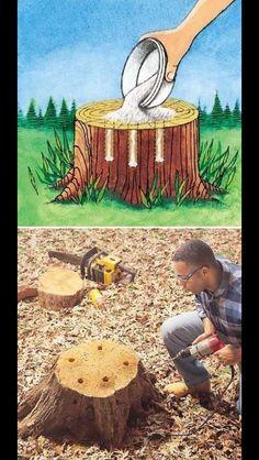 Get rid of tree stumps