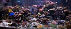 An awesome reef aquarium by Sanjay Joshi.