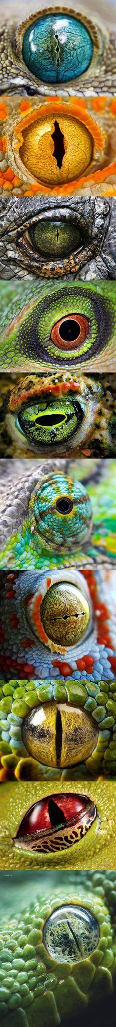 Ojos de diversos reptiles (y creo que un ojo de amfibio)