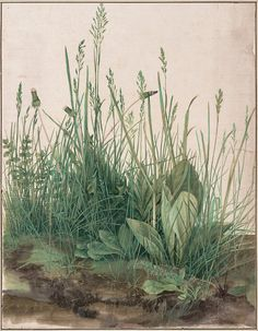 """The Large Piece of Turf"", Albrecht Dürer (German, 1471–1528), 1503, Watercolor and body color, heightened with white body color, Albertina, Vienna"