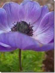 http://fishtailcottage.blogspot.com/2011/03/garden-cuttings-for-sharing.html