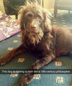 Dog looks like a 19th century philosopher!