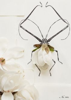 love the combination of photography and illustration - flowers & insects