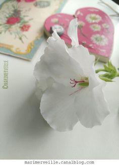 Autour des fleurs - création Marimerveille