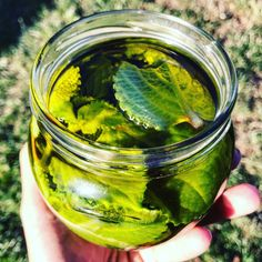 Rýmovníkový olej Pickles, Cucumber, Food, Fitness, Essen, Meals, Pickle, Yemek, Zucchini