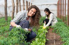 Planification ou réorganisation d'un concours local d'horticulture en relation avec les fleurons du Québec