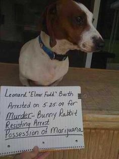 """Leonard """"Elmer Fudd"""" Booth  Arrested on 5-25-09 for:  MURDER - Bunny Rabbit  Resisting Arrest  Possession of Marijuana    """"Lenny was arrested while we were on vacation. I believed he wasinnocent until I personally witnessed the abduction of a bunny. After the bunny there werefrogs, and then birds. Although he only ate the frog, he swallowed it 'live'. He also had a fight with a large toad, but we think the toad won as the toad spit a clear liquid that seemed to be b"""