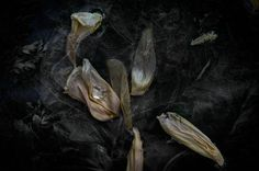 TINE POPPE PHOTOGRAPHY Not Dark Yet, International Photography Awards, Insect Species, Social Challenges, Dark Flowers, Taking Pictures