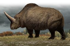 Elasmotherium by Carl Buell
