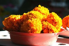Marigolds at the Bangladesh Market in Durban Wanderlust, Africa, Marketing, City, Food, Essen, Cities, Meals, Yemek