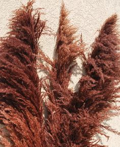 Dried Pampas Grass makes decorating easy.  From drieddecor.com