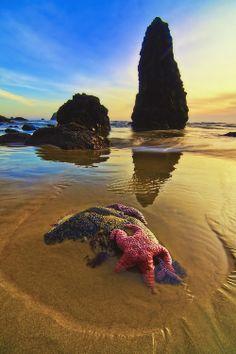 Red Starfish at Sunset