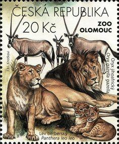Stamp: Gemsbok (Oryx gazella), Lion (Panthera leo) (Czech Republic) (Protection of the Nature: Animals in ZOO) Mi:CZ 893,POF:CZ 895