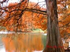 colours of the earth - Google Search