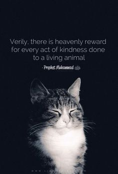 Kindness Pet Animal Islam Prophet Muhammad SAW Quran Verses, Quran Quotes, Faith Quotes, Qoutes, Wisdom Quotes, Funny Quotes, Kindness To Animals, Kindness Quotes, Muslim Quotes