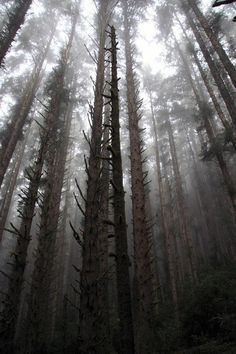 Today we're daydreaming about Redwood National Park.