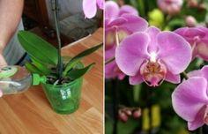 Garden, Flowers, Decor, Mai, Banana, Plant, Garten, Decoration, Lawn And Garden