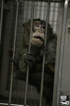 Stress, isolement: les animaux de laboratoire vivent un calvaire. Et nous fermons les yeux - le Plus