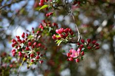 Spring Trees | Snapshots of Life: Spring in Bloom: Happy Earth Day!
