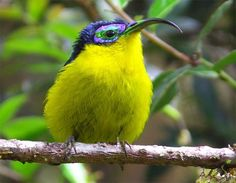 I adore birds they are all so exotic looking